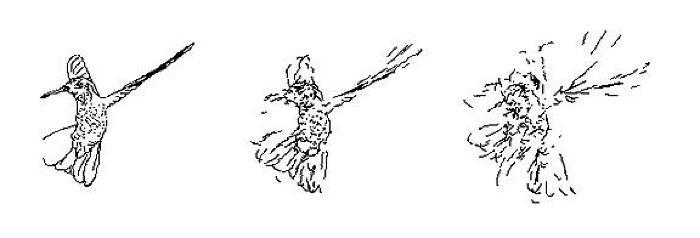 Hummingbird (j)